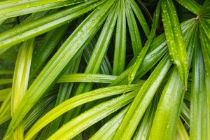 Bamboo Palm one of the best houseplants to have