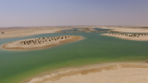 qatar-will-soon-have-the-biggest-man-made-forest-by-nakheel-landscaping