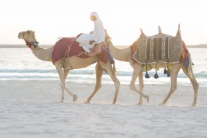 Man riding a camel on the beach in Qatar