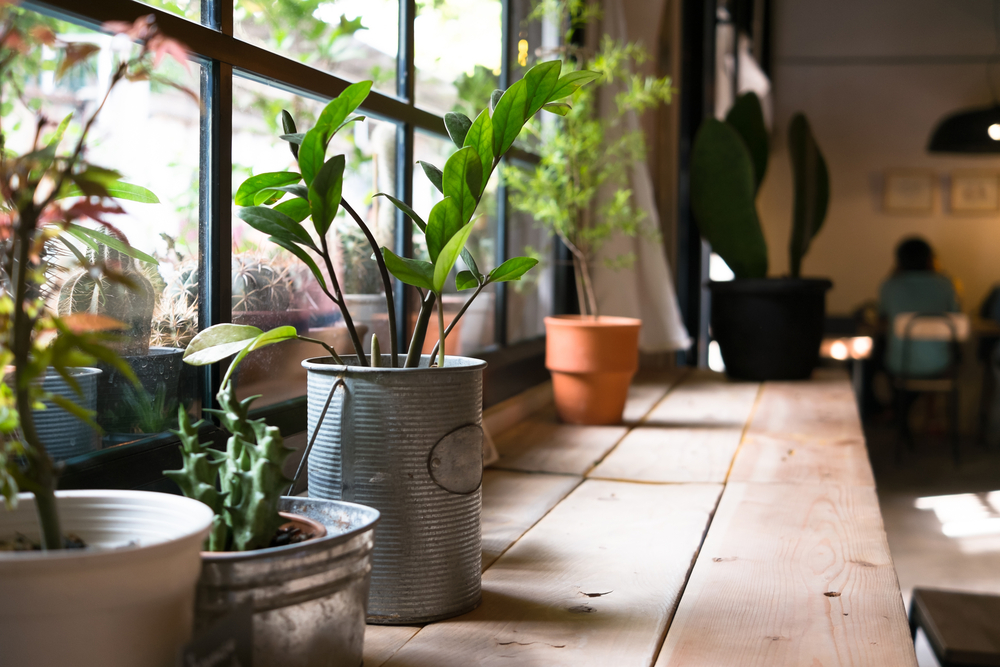 best plants for the air of each room in your house