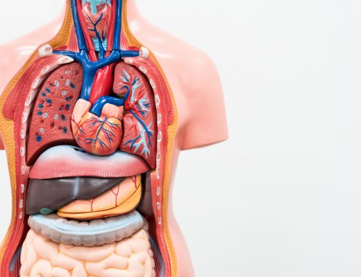 there are some organs in the human body that you can live without