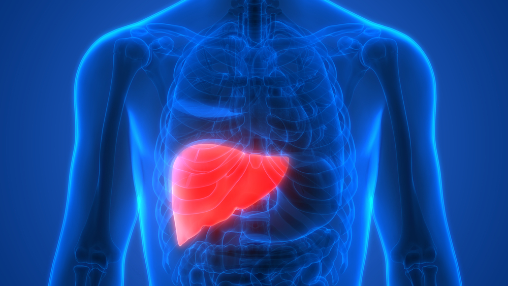 The liver is very well a crucial organ in the human body