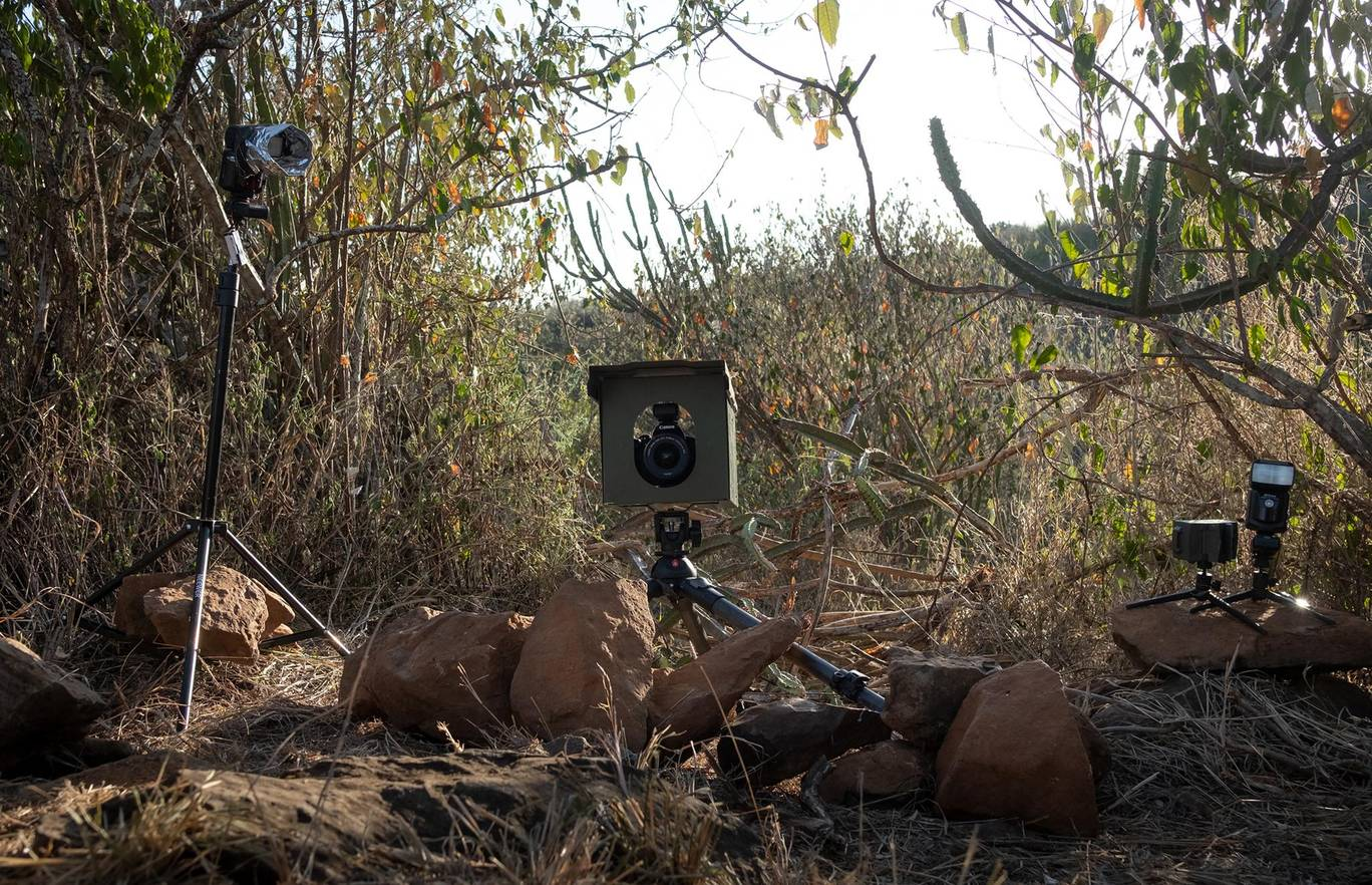 Photographer Will Burrard-Lucas set up camera traps to take pictures of the black panther
