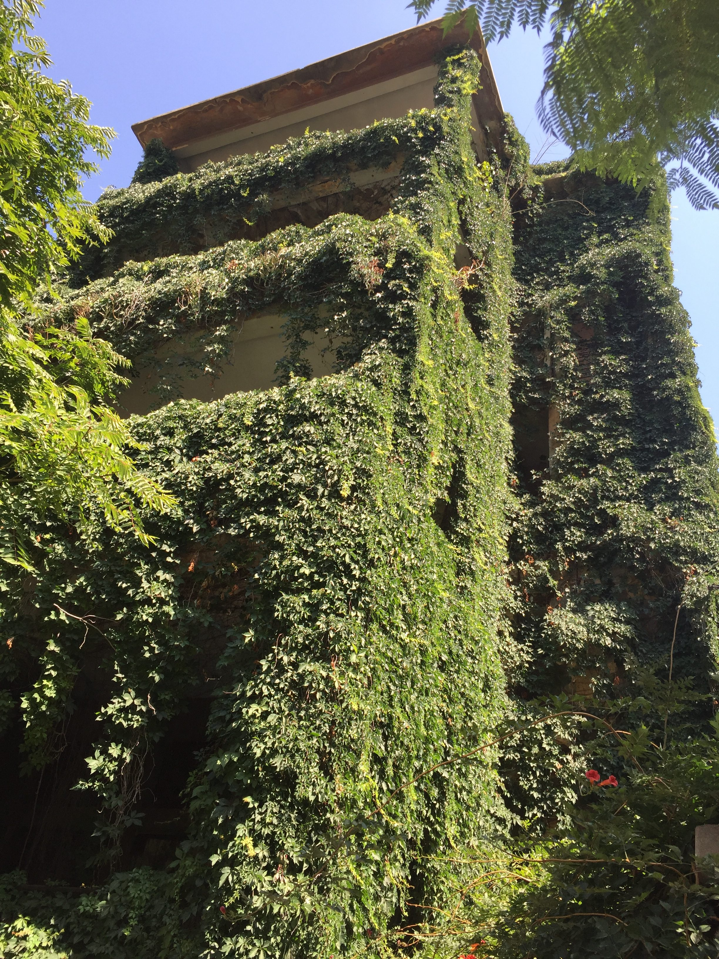 Plants covering an abandoned building in Old Beirut