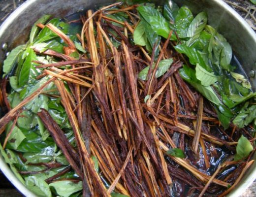 ayahuasca fights Alzheimer's and Down Syndrome. (Photo ABC)