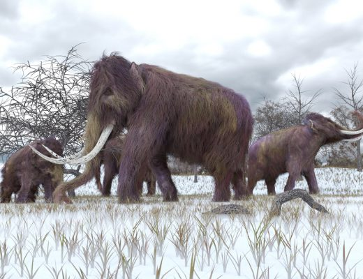 Wooly mammoth art - Shutterstock