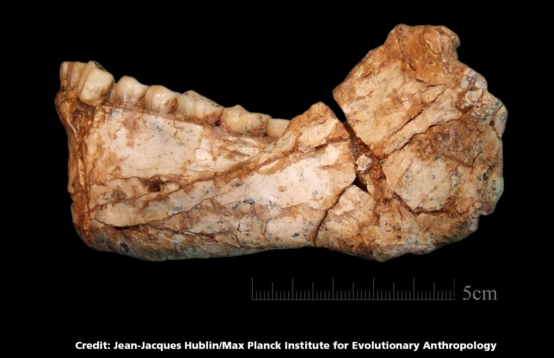 Oldest Human Remains Found in Morocco - The life pile