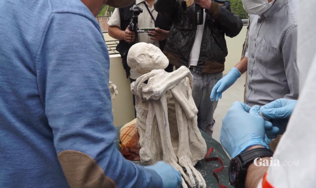 One of the mummified aliens found in the Nazca desert of Peru - Gaia