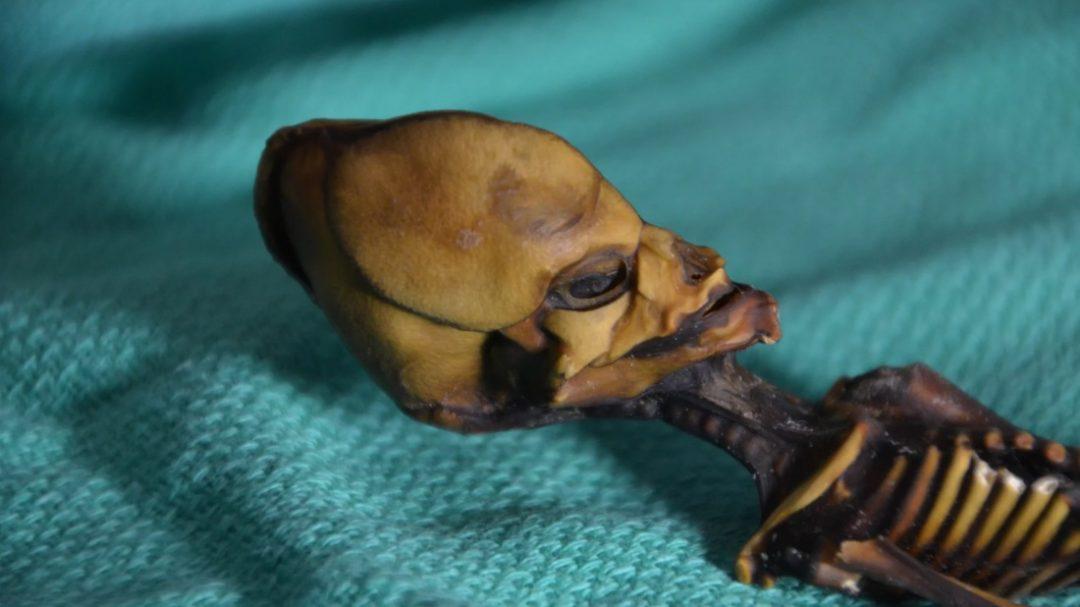 the Atacama skeleton, Ata, is not alien, but human