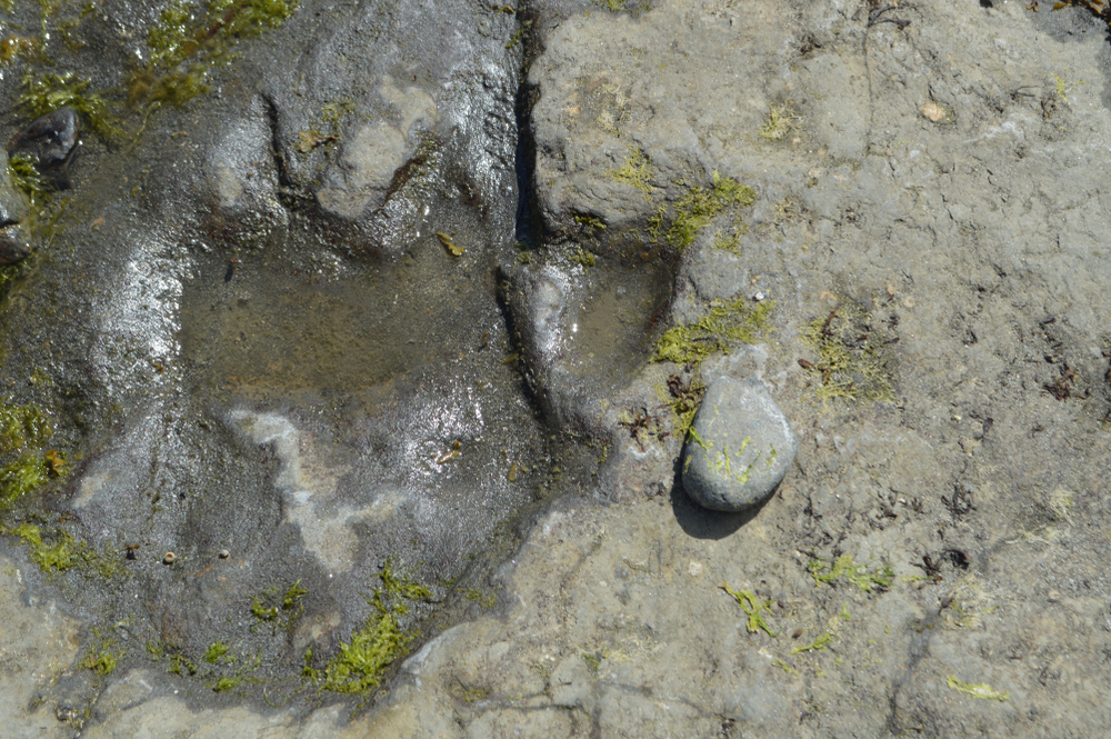dinosaur footprints belonging to a cousin of the tyrannosaurus rex have been found on the Isle of Skye, Scotland