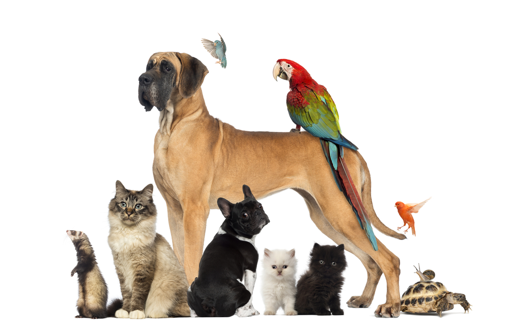 Pets That Are Easy To Take Care Of The Life Pile