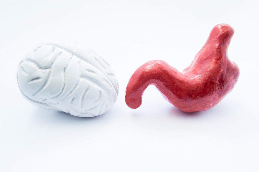 the human body has a second brain independent from the central nervous system made of neurotransmitters in the gut